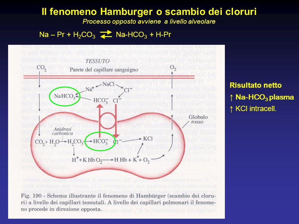 Na – Pr + H 2 CO 3 Na-HCO 3 + H-Pr Il fenomeno Hamburger o scambio dei cloruri Processo opposto avviene a livello alveolare Risultato netto ↑ Na-HCO 3