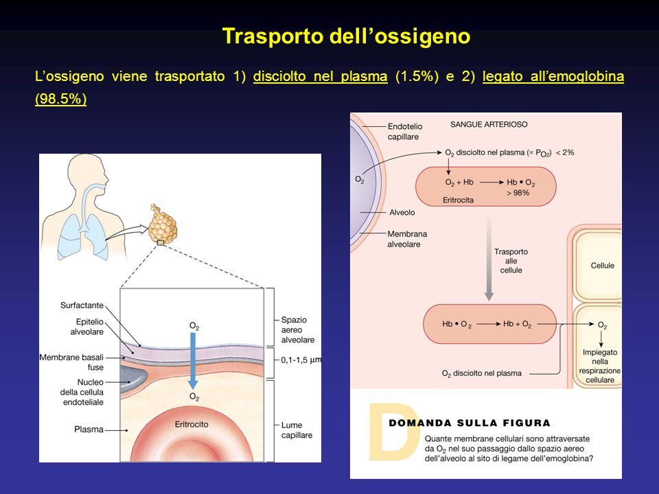 L'ossigeno viene trasportato 1) disciolto nel plasma (1.5%) e 2) legato all'emoglobina (98.5%) Trasporto dell'ossigeno