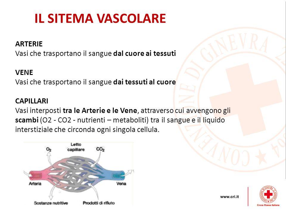 IL SITEMA VASCOLARE ARTERIE Vasi che trasportano il sangue dal cuore ai tessuti VENE Vasi che trasportano il sangue dai tessuti al cuore CAPILLARI Vasi interposti tra le Arterie e le Vene, attraverso cui avvengono gli scambi (O2 - CO2 - nutrienti – metaboliti) tra il sangue e il liquido interstiziale che circonda ogni singola cellula.