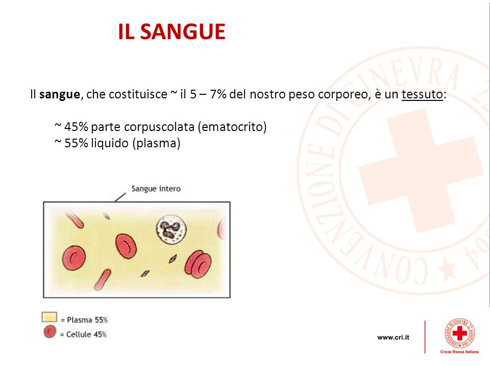 IL SANGUE ll sangue, che costituisce ~ il 5 – 7% del nostro peso corporeo, è un tessuto: ~ 45% parte corpuscolata (ematocrito) ~ 55% liquido (plasma)