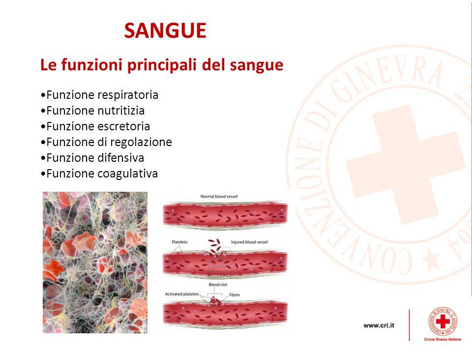 SANGUE Funzione respiratoria Funzione nutritizia Funzione escretoria Funzione di regolazione Funzione difensiva Funzione coagulativa Le funzioni principali del sangue