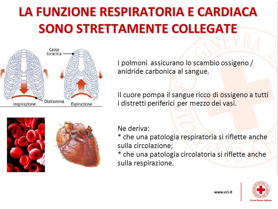 LA FUNZIONE RESPIRATORIA E CARDIACA SONO STRETTAMENTE COLLEGATE I polmoni assicurano lo scambio ossigeno / anidride carbonica al sangue.