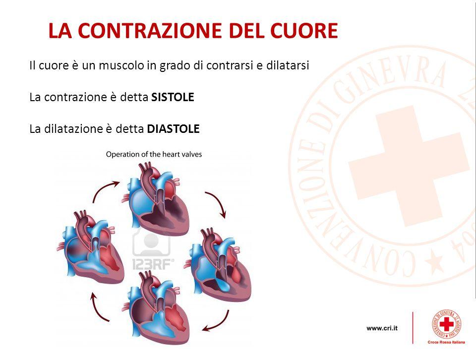 LA CONTRAZIONE DEL CUORE Il cuore è un muscolo in grado di contrarsi e dilatarsi La contrazione è detta SISTOLE La dilatazione è detta DIASTOLE