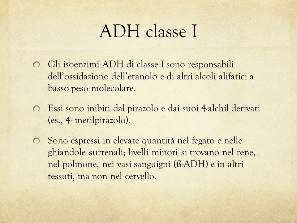 ADH classe I Gli isoenzimi ADH di classe I sono responsabili dell'ossidazione dell'etanolo e di altri alcoli alifatici a basso peso molecolare.