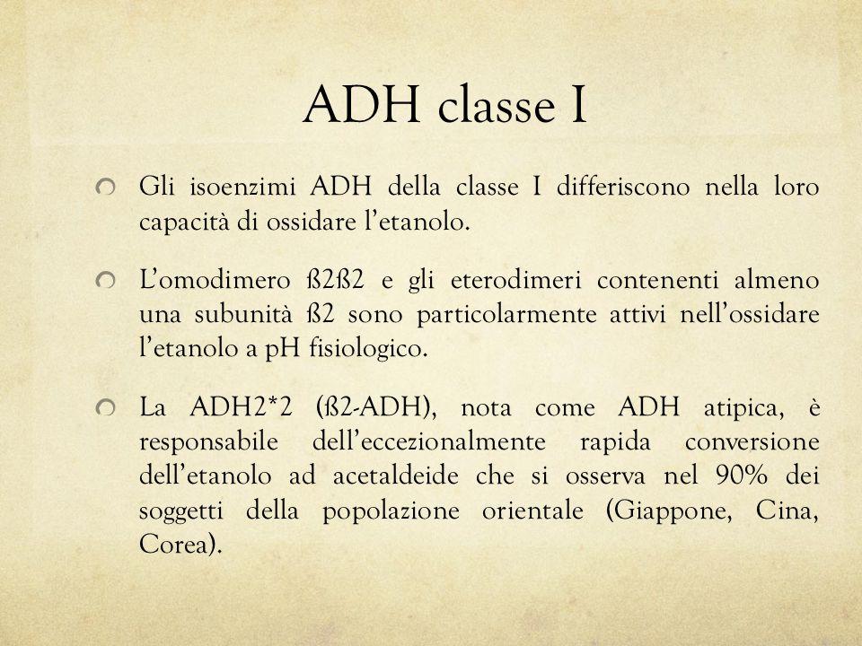 Gli isoenzimi ADH della classe I differiscono nella loro capacità di ossidare l'etanolo. L'omodimero ß2ß2 e gli eterodimeri contenenti almeno una subu