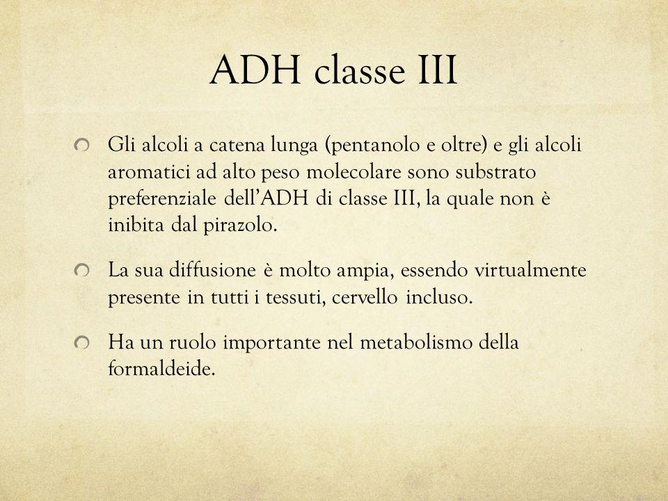 ADH classe III Gli alcoli a catena lunga (pentanolo e oltre) e gli alcoli aromatici ad alto peso molecolare sono substrato preferenziale dell'ADH di classe III, la quale non è inibita dal pirazolo.