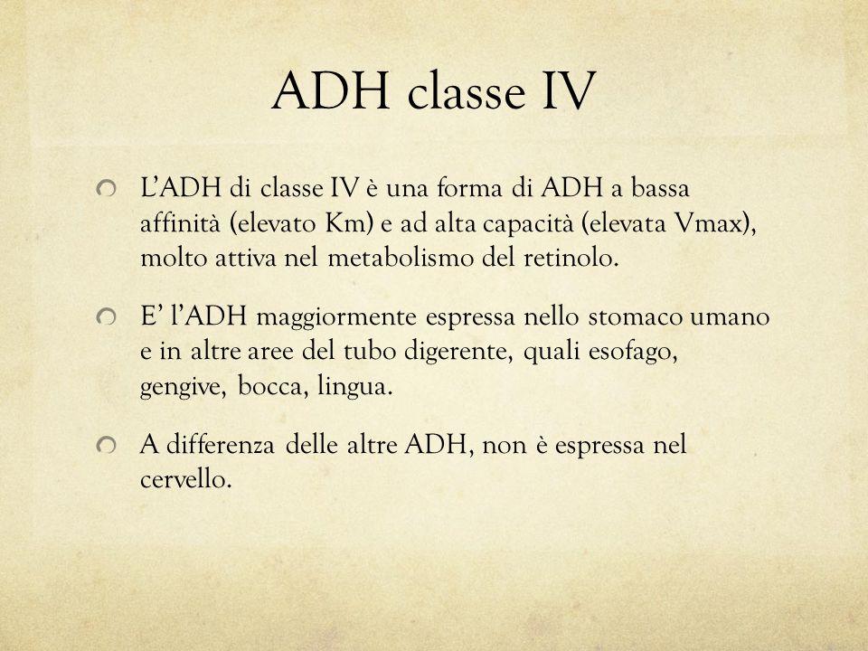 ADH classe IV L'ADH di classe IV è una forma di ADH a bassa affinità (elevato Km) e ad alta capacità (elevata Vmax), molto attiva nel metabolismo del retinolo.