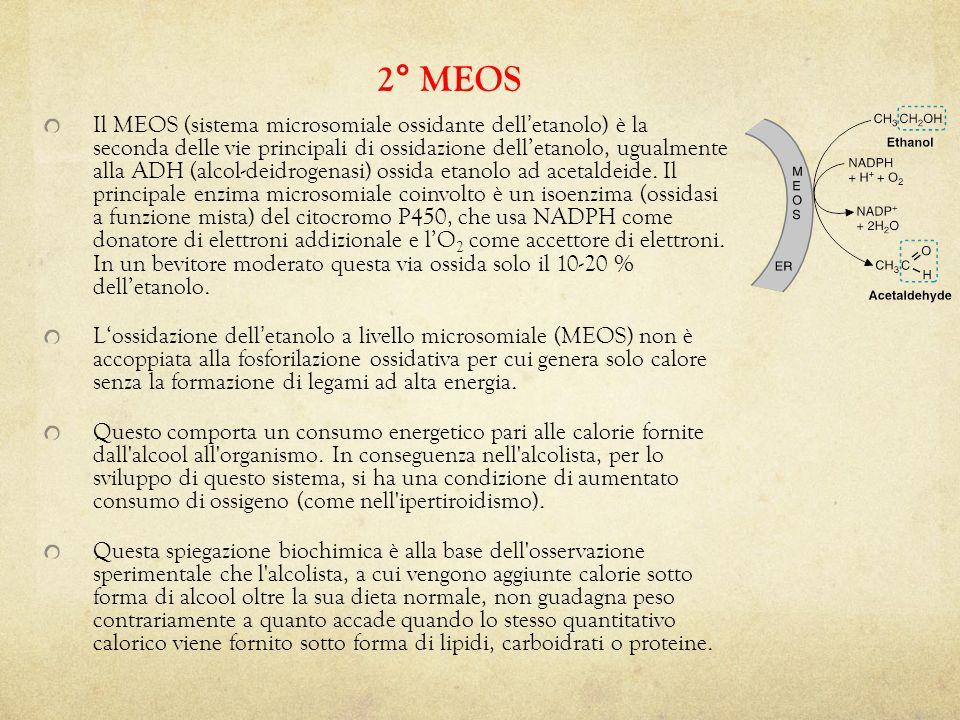 Il MEOS (sistema microsomiale ossidante dell ' etanolo) è la seconda delle vie principali di ossidazione dell'etanolo, ugualmente alla ADH (alcol-deidrogenasi) ossida etanolo ad acetaldeide.