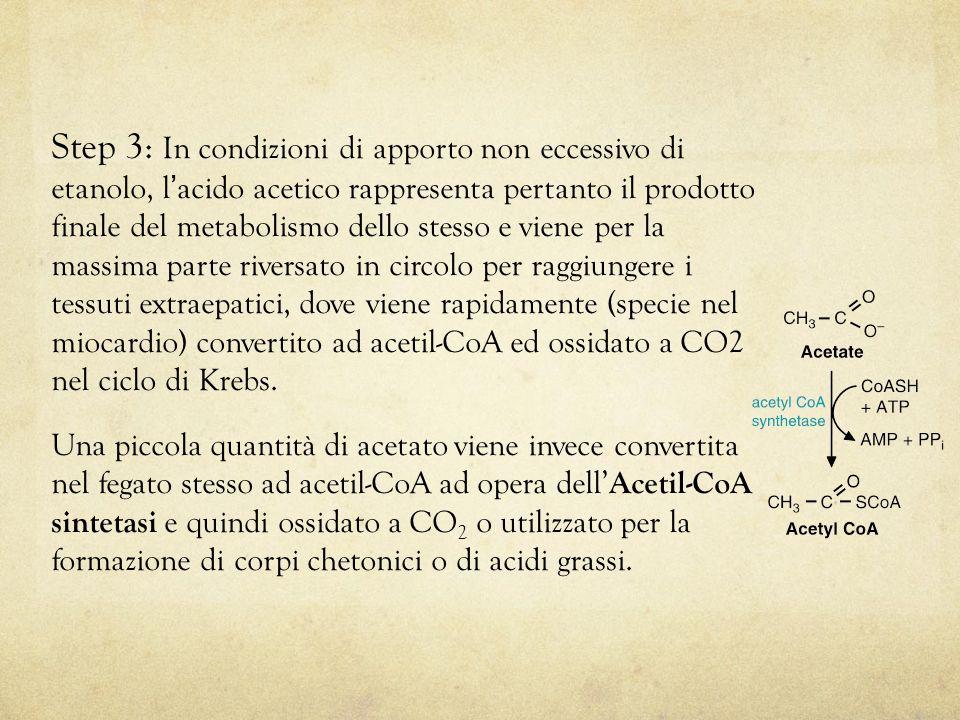 Step 3: In condizioni di apporto non eccessivo di etanolo, l ' acido acetico rappresenta pertanto il prodotto finale del metabolismo dello stesso e viene per la massima parte riversato in circolo per raggiungere i tessuti extraepatici, dove viene rapidamente (specie nel miocardio) convertito ad acetil-CoA ed ossidato a CO2 nel ciclo di Krebs.