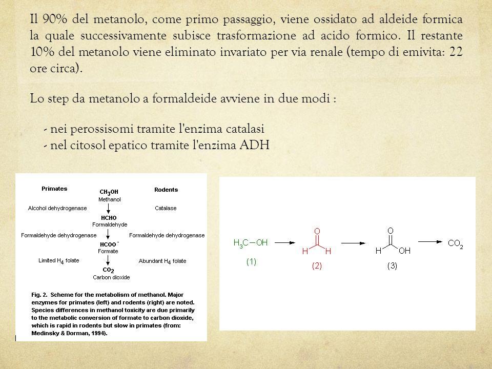 Il 90% del metanolo, come primo passaggio, viene ossidato ad aldeide formica la quale successivamente subisce trasformazione ad acido formico. Il rest