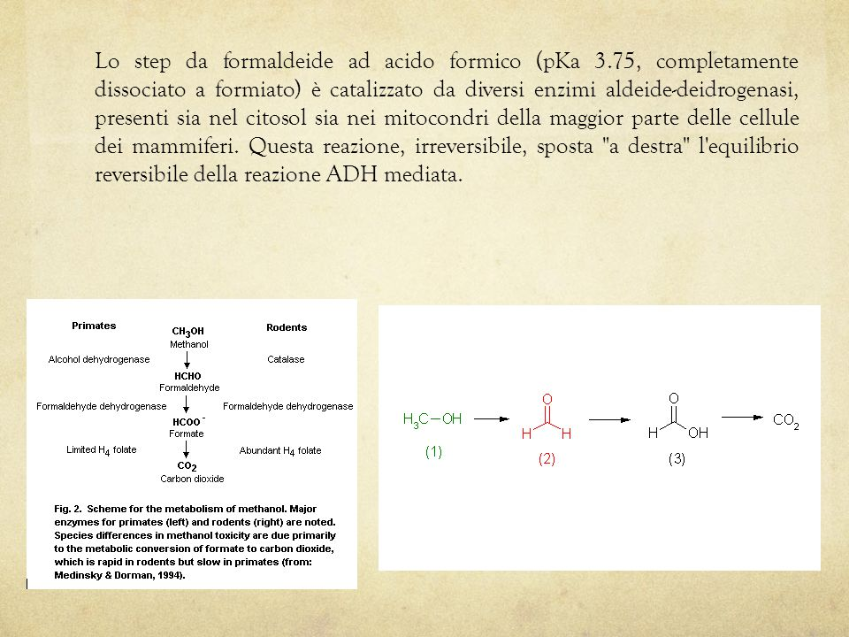 Lo step da formaldeide ad acido formico (pKa 3.75, completamente dissociato a formiato) è catalizzato da diversi enzimi aldeide-deidrogenasi, presenti sia nel citosol sia nei mitocondri della maggior parte delle cellule dei mammiferi.