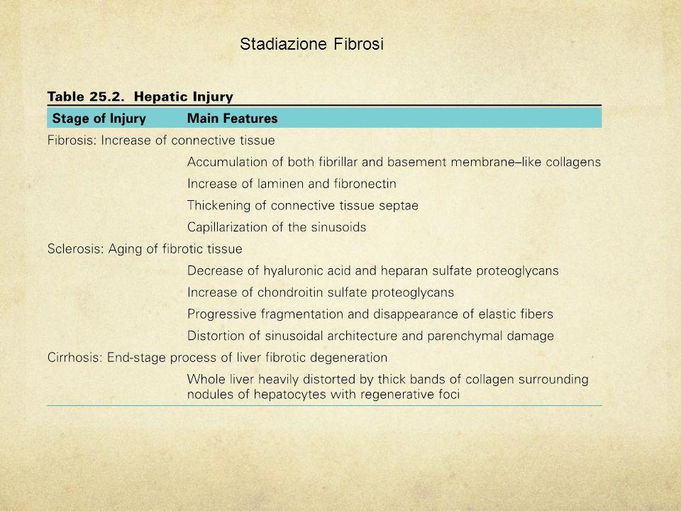 Stadiazione Fibrosi