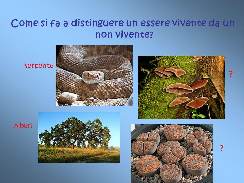 Come si fa a distinguere un essere vivente da un non vivente? serpente alberi ? ?