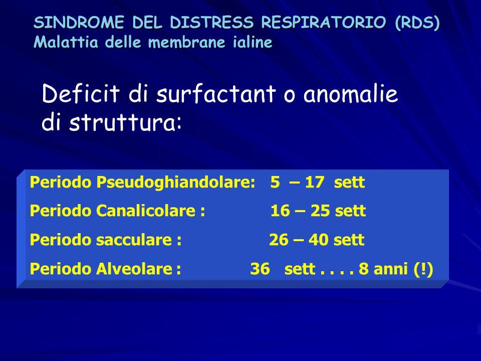 Periodo Pseudoghiandolare: 5 – 17 sett Periodo Canalicolare : 16 – 25 sett Periodo sacculare : 26 – 40 sett Periodo Alveolare : 36 sett.... 8 anni (!)