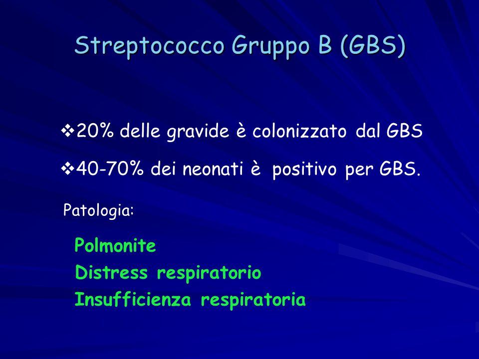 Streptococco Gruppo B (GBS)  20% delle gravide è colonizzato dal GBS  40-70% dei neonati è positivo per GBS. Polmonite Distress respiratorio Insuffi