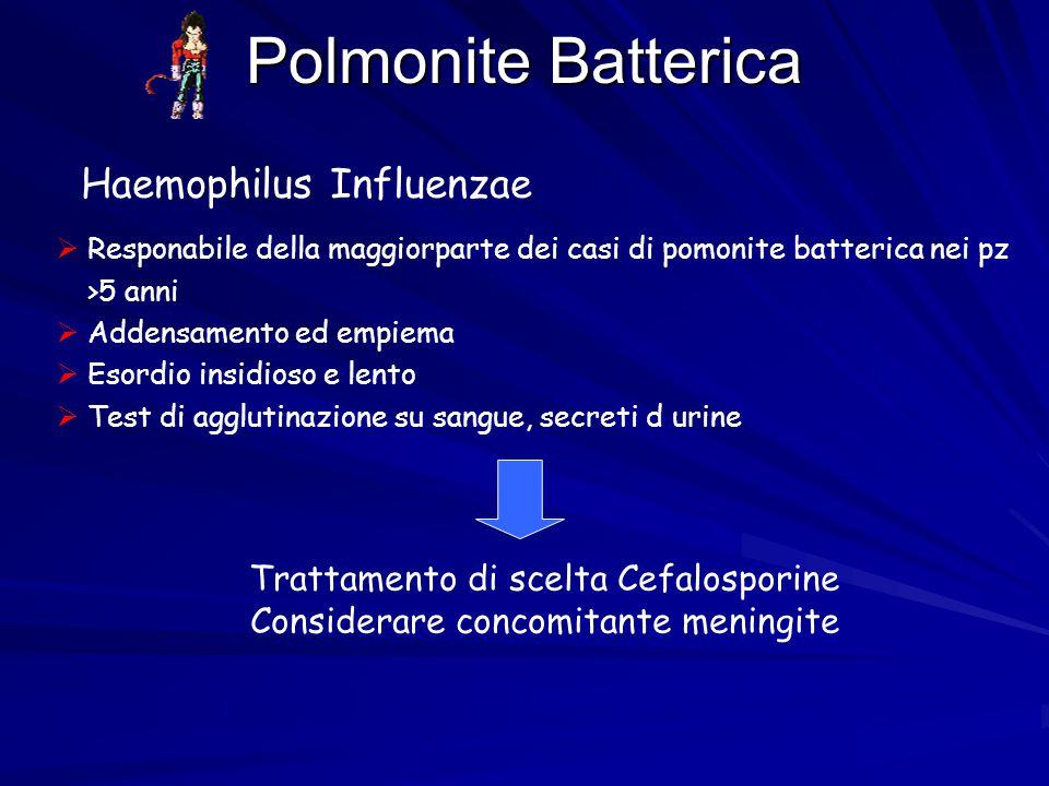 Polmonite Batterica Haemophilus Influenzae  Responabile della maggiorparte dei casi di pomonite batterica nei pz >5 anni  Addensamento ed empiema 