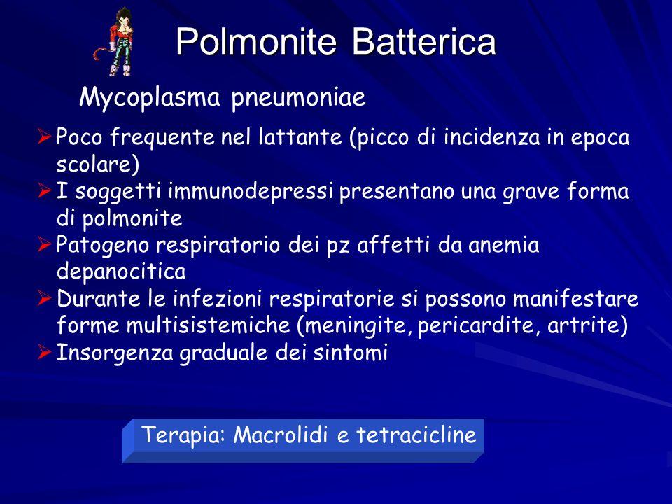Polmonite Batterica  Poco frequente nel lattante (picco di incidenza in epoca scolare)  I soggetti immunodepressi presentano una grave forma di polm