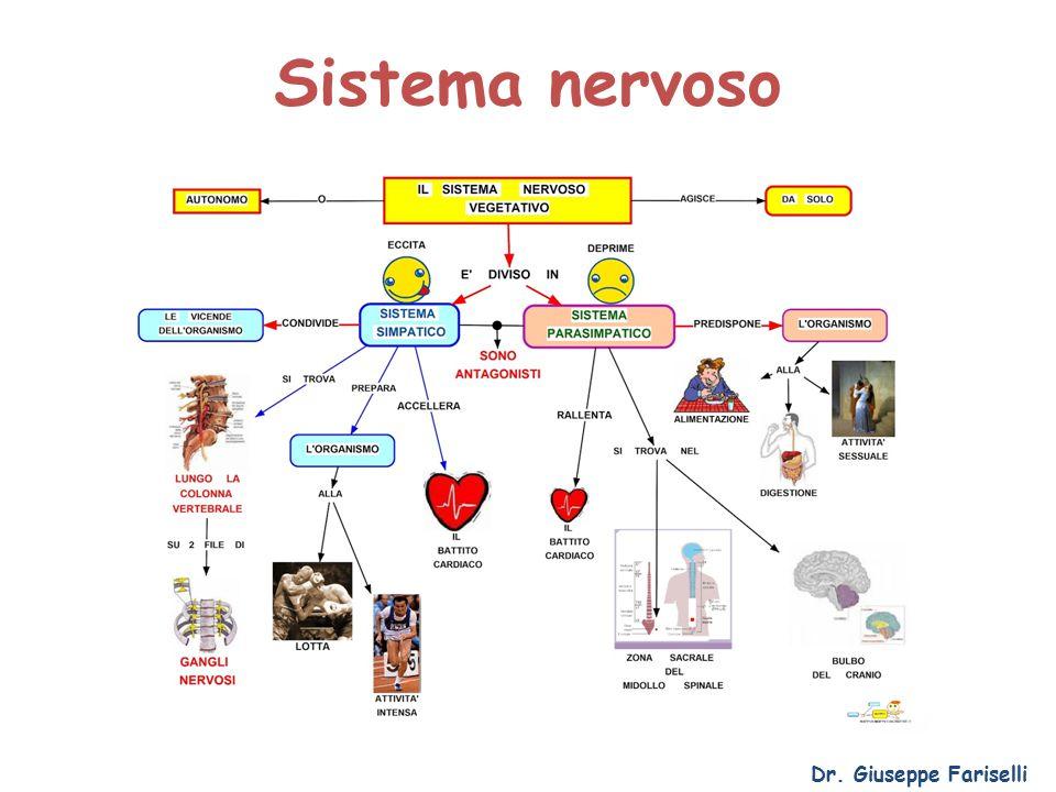 Sistema nervoso Dr. Giuseppe Fariselli