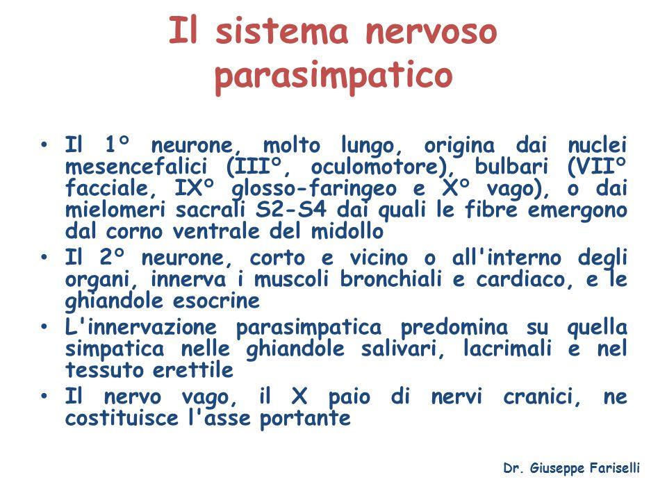 Il sistema nervoso parasimpatico Il 1° neurone, molto lungo, origina dai nuclei mesencefalici (III°, oculomotore), bulbari (VII° facciale, IX° glosso-