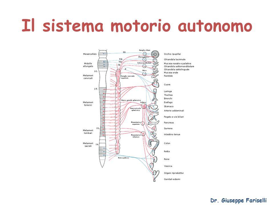 Il sistema motorio autonomo Dr. Giuseppe Fariselli