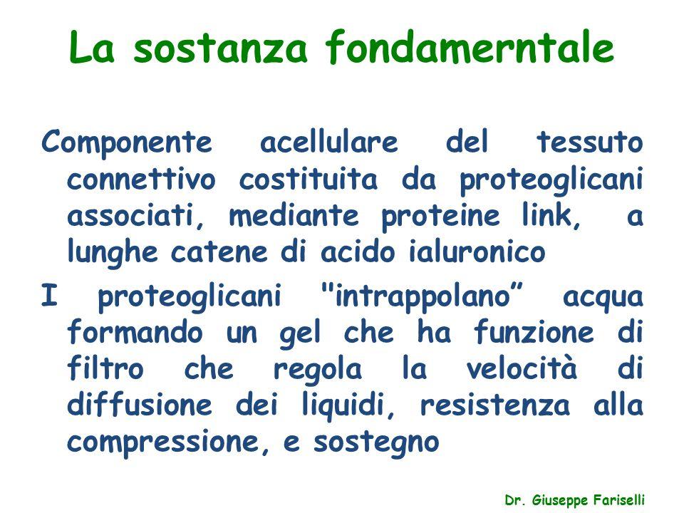 La sostanza fondamerntale Dr. Giuseppe Fariselli Componente acellulare del tessuto connettivo costituita da proteoglicani associati, mediante proteine