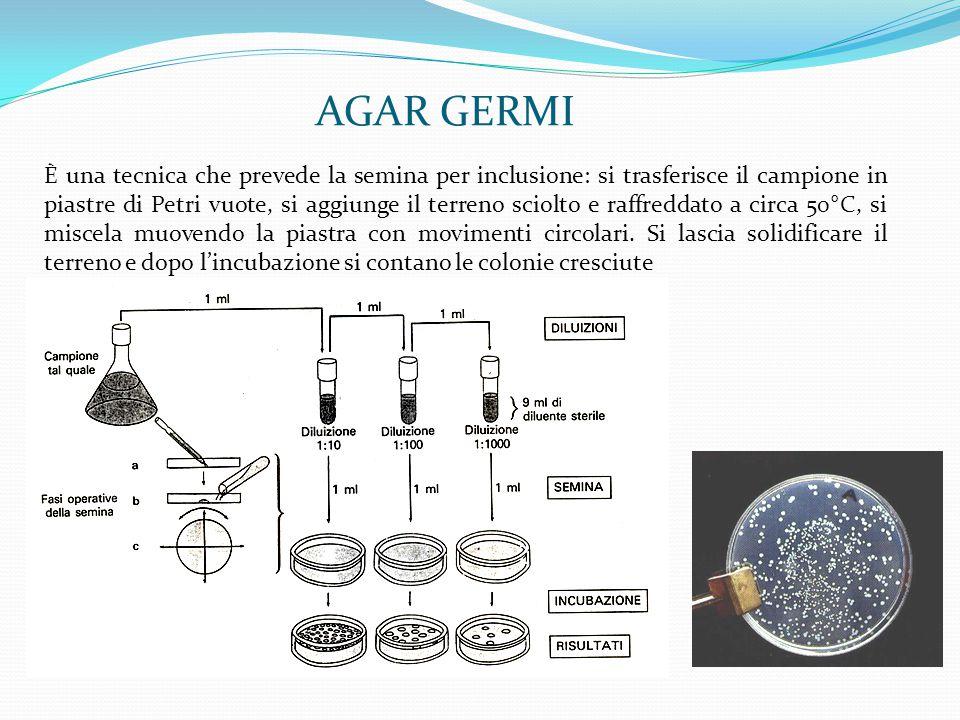 AGAR GERMI È una tecnica che prevede la semina per inclusione: si trasferisce il campione in piastre di Petri vuote, si aggiunge il terreno sciolto e