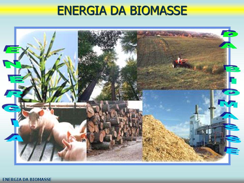 ENERGIA DA BIOMASSE