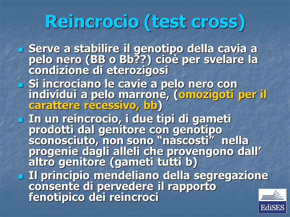 Reincrocio (test cross) Serve a stabilire il genotipo della cavia a pelo nero (BB o Bb??) cioè per svelare la condizione di eterozigosi Serve a stabil