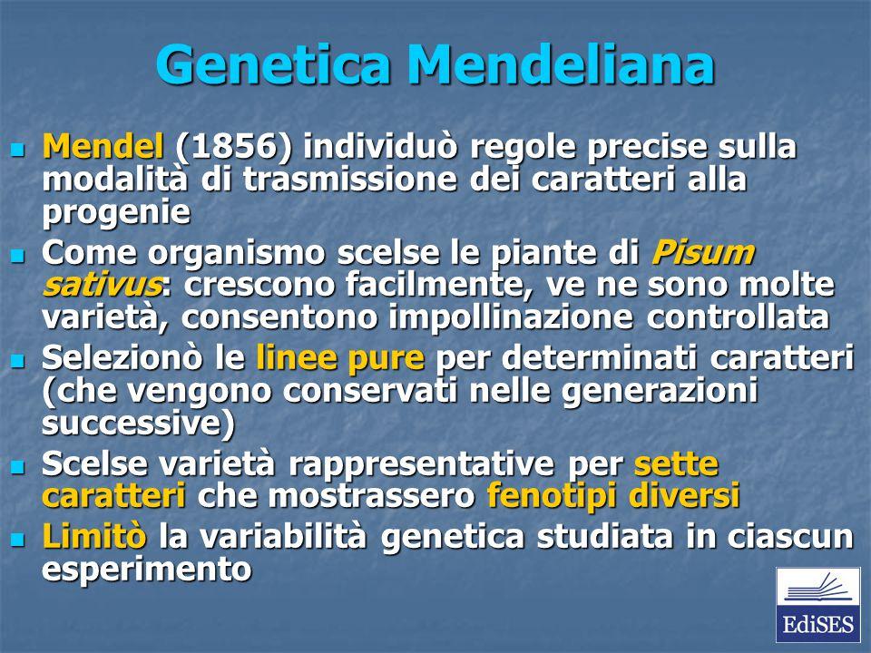 Genetica Mendeliana Mendel (1856) individuò regole precise sulla modalità di trasmissione dei caratteri alla progenie Mendel (1856) individuò regole p