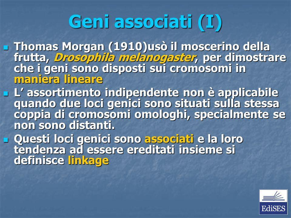 Geni associati (I) Thomas Morgan (1910)usò il moscerino della frutta, Drosophila melanogaster, per dimostrare che i geni sono disposti sui cromosomi i