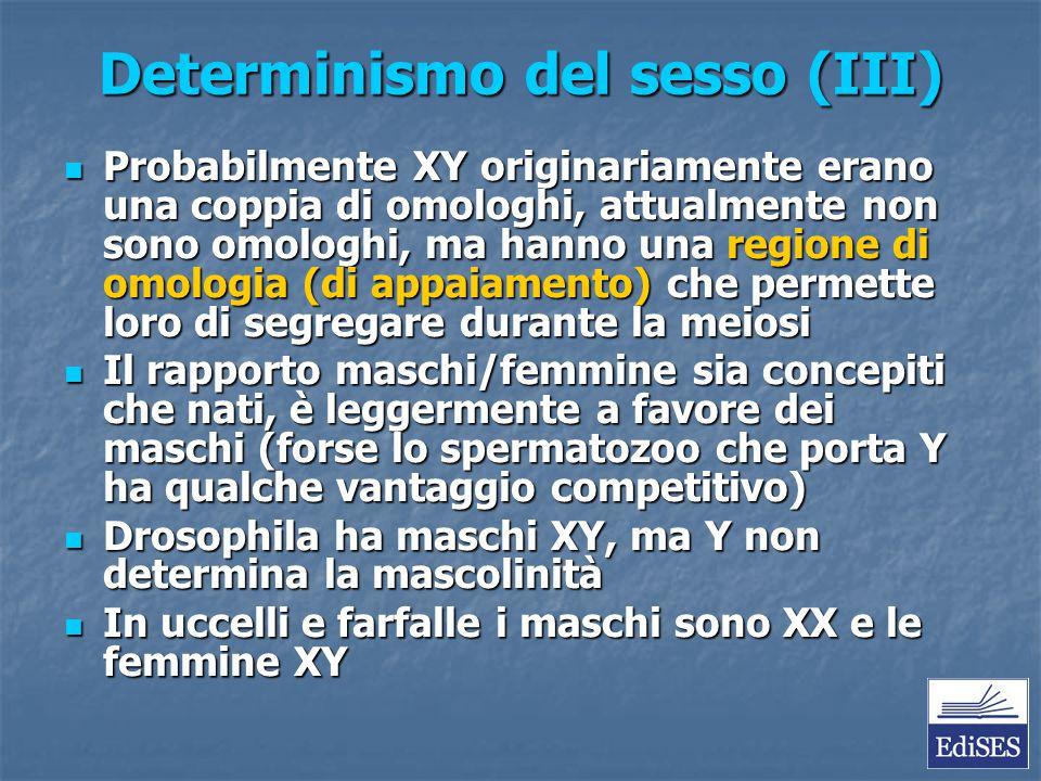 Determinismo del sesso (III) Probabilmente XY originariamente erano una coppia di omologhi, attualmente non sono omologhi, ma hanno una regione di omo