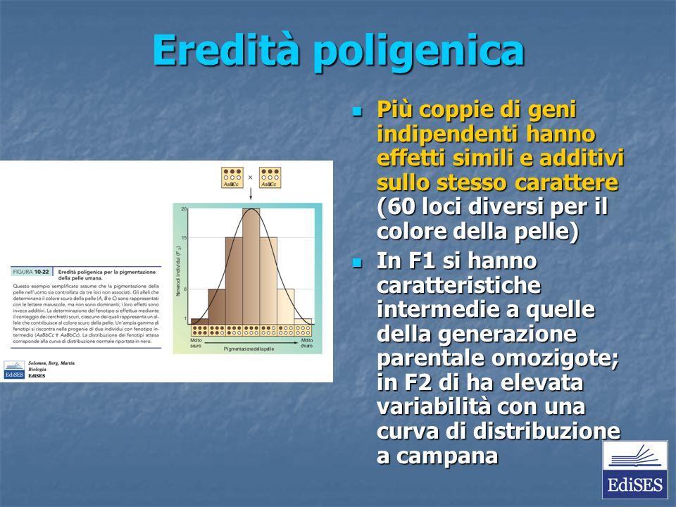 Eredità poligenica Più coppie di geni indipendenti hanno effetti simili e additivi sullo stesso carattere (60 loci diversi per il colore della pelle)