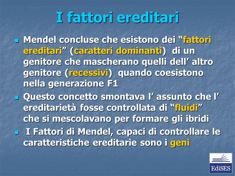 """I fattori ereditari Mendel concluse che esistono dei """"fattori ereditari"""" (caratteri dominanti) di un genitore che mascherano quelli dell' altro genito"""