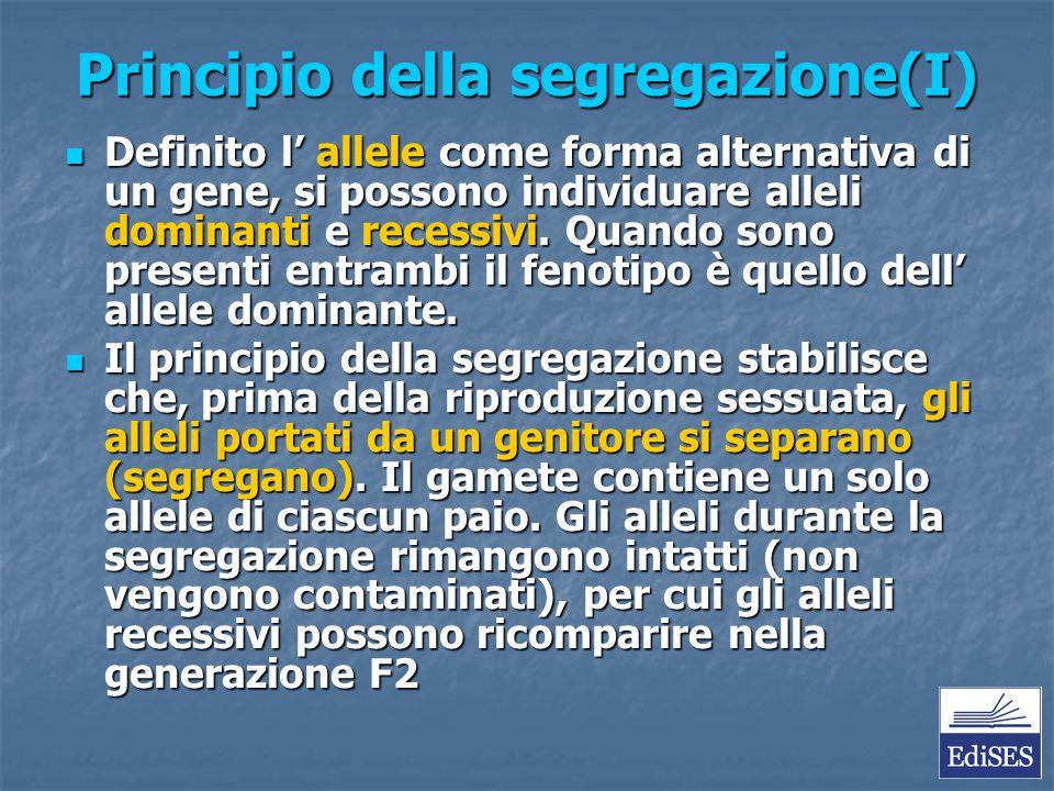 Principio della segregazione(I) Definito l' allele come forma alternativa di un gene, si possono individuare alleli dominanti e recessivi. Quando sono