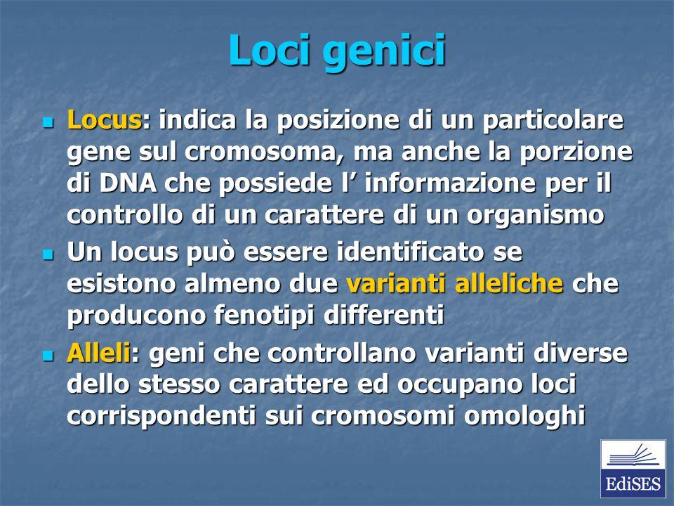 Loci genici Locus: indica la posizione di un particolare gene sul cromosoma, ma anche la porzione di DNA che possiede l' informazione per il controllo