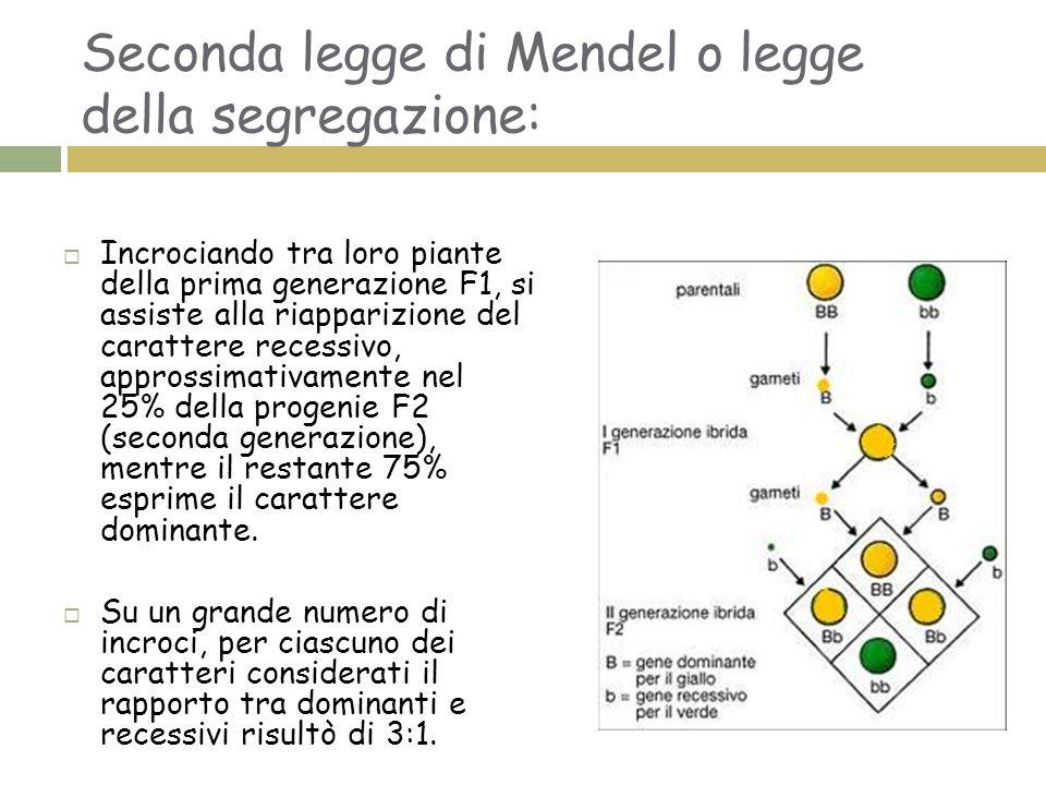 Seconda legge di Mendel o legge della segregazione:  Incrociando tra loro piante della prima generazione F1, si assiste alla riapparizione del carattere recessivo, approssimativamente nel 25% della progenie F2 (seconda generazione), mentre il restante 75% esprime il carattere dominante.