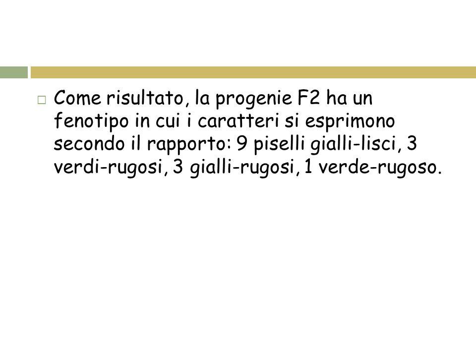  Come risultato, la progenie F2 ha un fenotipo in cui i caratteri si esprimono secondo il rapporto: 9 piselli gialli-lisci, 3 verdi-rugosi, 3 gialli-rugosi, 1 verde-rugoso.