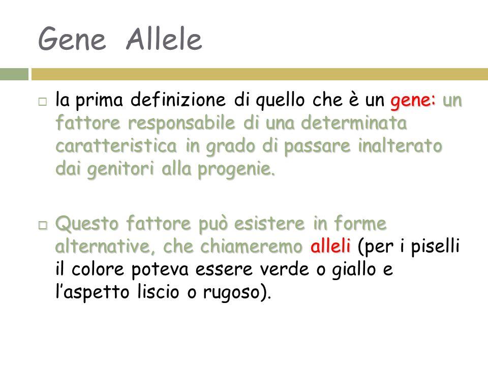 Gene Allele gene: un fattore responsabile di una determinata caratteristica in grado di passare inalterato dai genitori alla progenie.  la prima defi