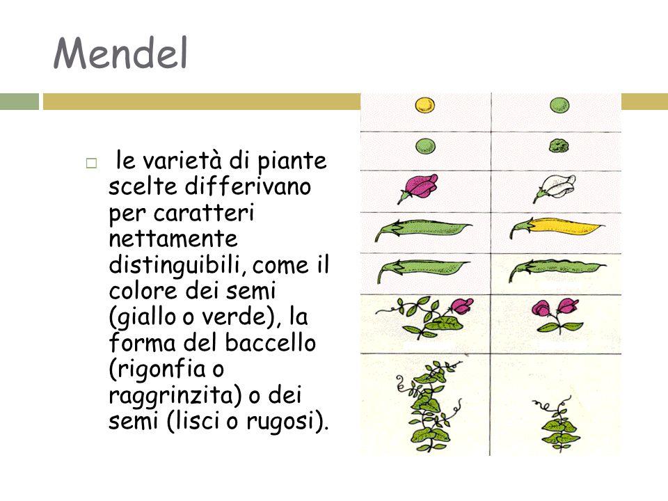 Mendel  le varietà di piante scelte differivano per caratteri nettamente distinguibili, come il colore dei semi (giallo o verde), la forma del baccello (rigonfia o raggrinzita) o dei semi (lisci o rugosi).
