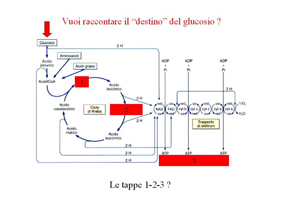 Come si chiama questo meccanismo ? PP ?B ?