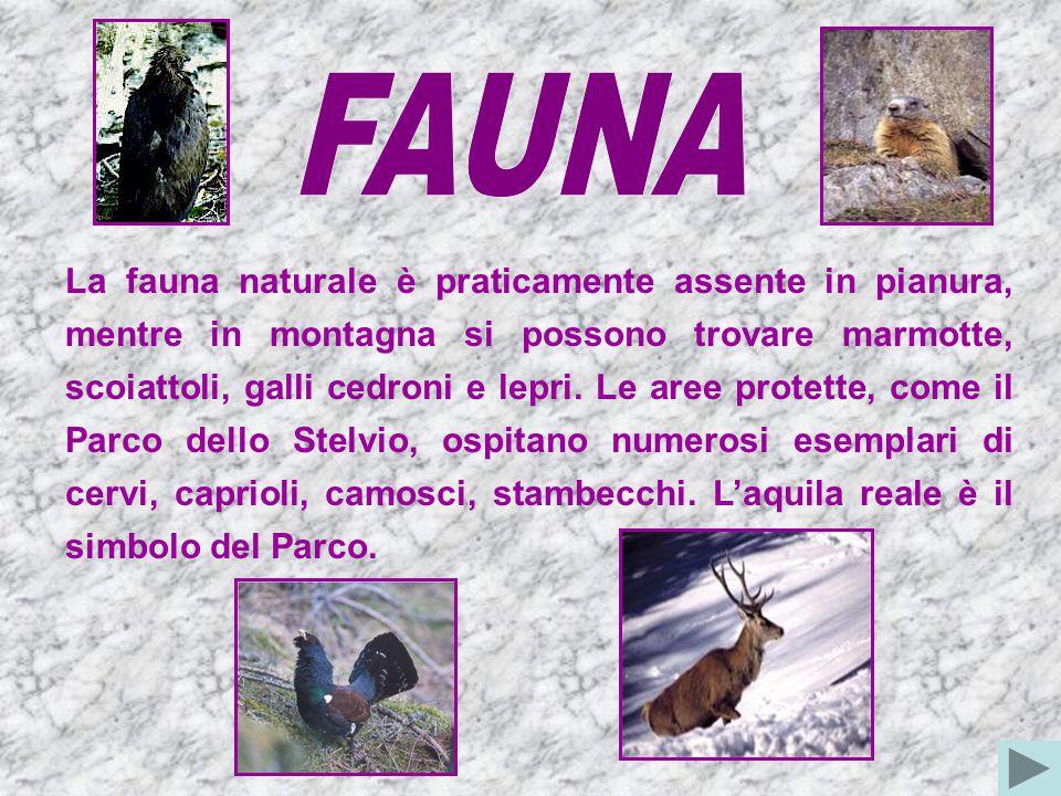 La fauna naturale è praticamente assente in pianura, mentre in montagna si possono trovare marmotte, scoiattoli, galli cedroni e lepri.