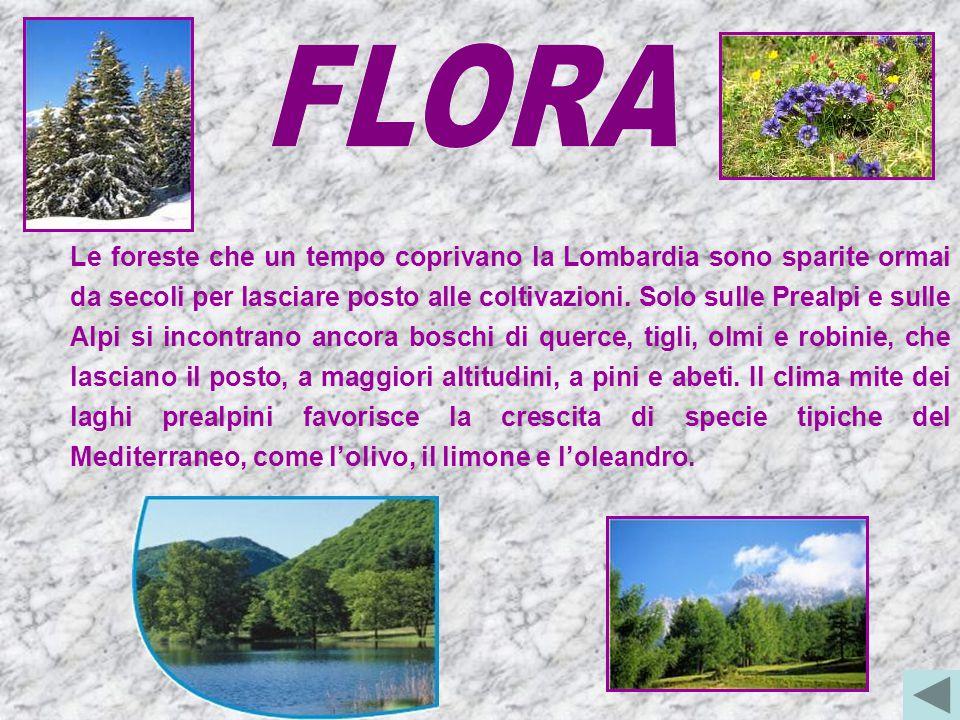 Le foreste che un tempo coprivano la Lombardia sono sparite ormai da secoli per lasciare posto alle coltivazioni.