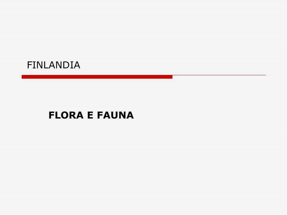 FINLANDIA FLORA E FAUNA