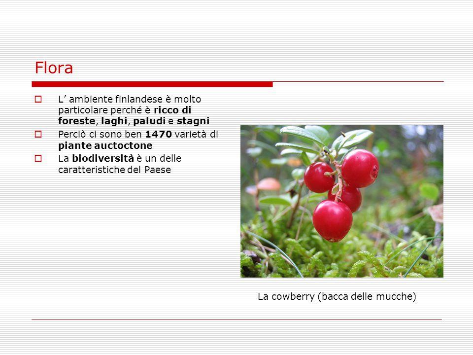 Flora  L' ambiente finlandese è molto particolare perché è ricco di foreste, laghi, paludi e stagni  Perciò ci sono ben 1470 varietà di piante aucto