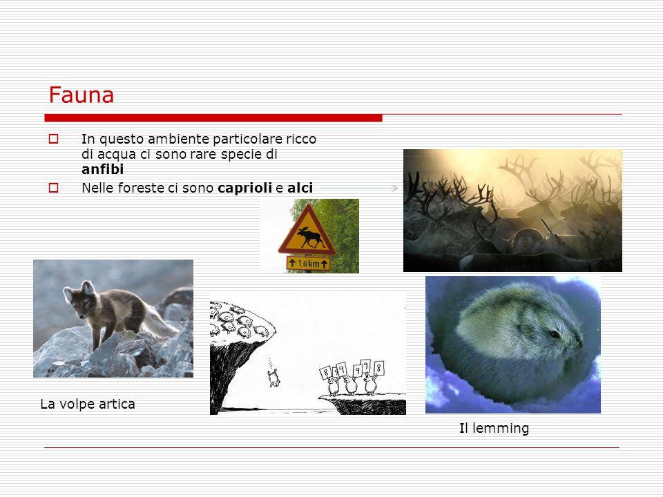 Fauna  In questo ambiente particolare ricco di acqua ci sono rare specie di anfibi  Nelle foreste ci sono caprioli e alci Il lemming La volpe artica