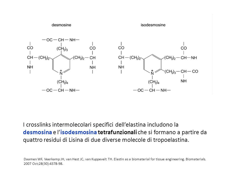 I crosslinks intermolecolari specifici dell'elastina includono la desmosina e l'isodesmosina tetrafunzionali che si formano a partire da quattro residui di Lisina di due diverse molecole di tropoelastina.
