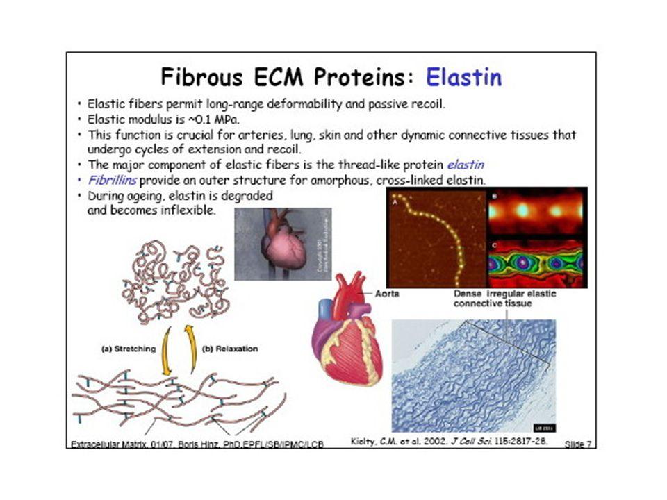Alveoli polmonari http://en.wikipedia.org/wiki/Pulmonary_alveolus http://wmaresh.wikispaces.com/06+Cardiology http://www.onlinehealthcaredegrees.com/resourc es/picture-atlas-to-microanatomy/
