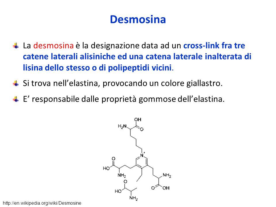 Desmosina La desmosina è la designazione data ad un cross-link fra tre catene laterali alisiniche ed una catena laterale inalterata di lisina dello stesso o di polipeptidi vicini.