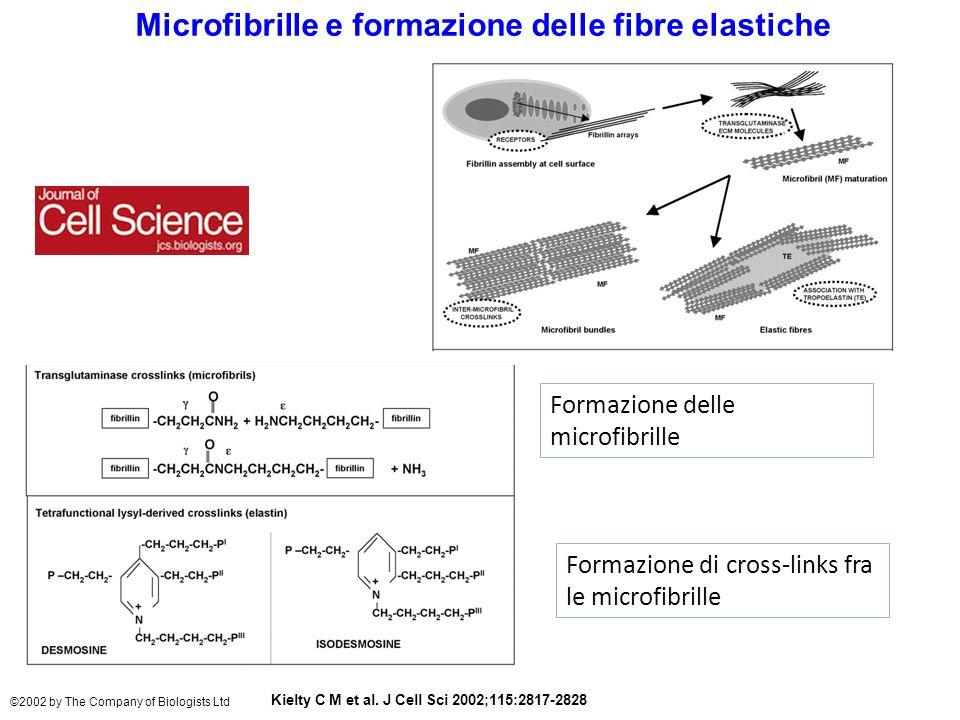 Microfibrille e formazione delle fibre elastiche Kielty C M et al.