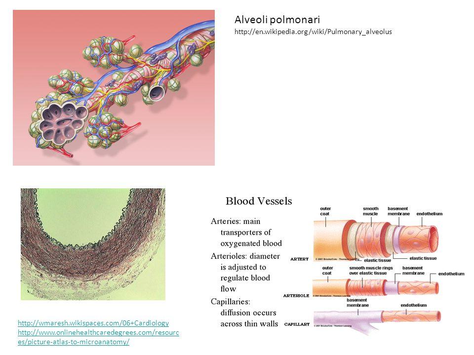 Rosenbloom J, Abrams WR, Mecham R.Extracellular matrix 4: the elastic fiber.